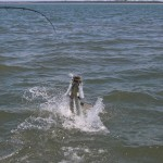 tarpon-fishing-charter
