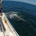 reef-fishing-nearshore4