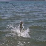 tarpon-fishing-charter